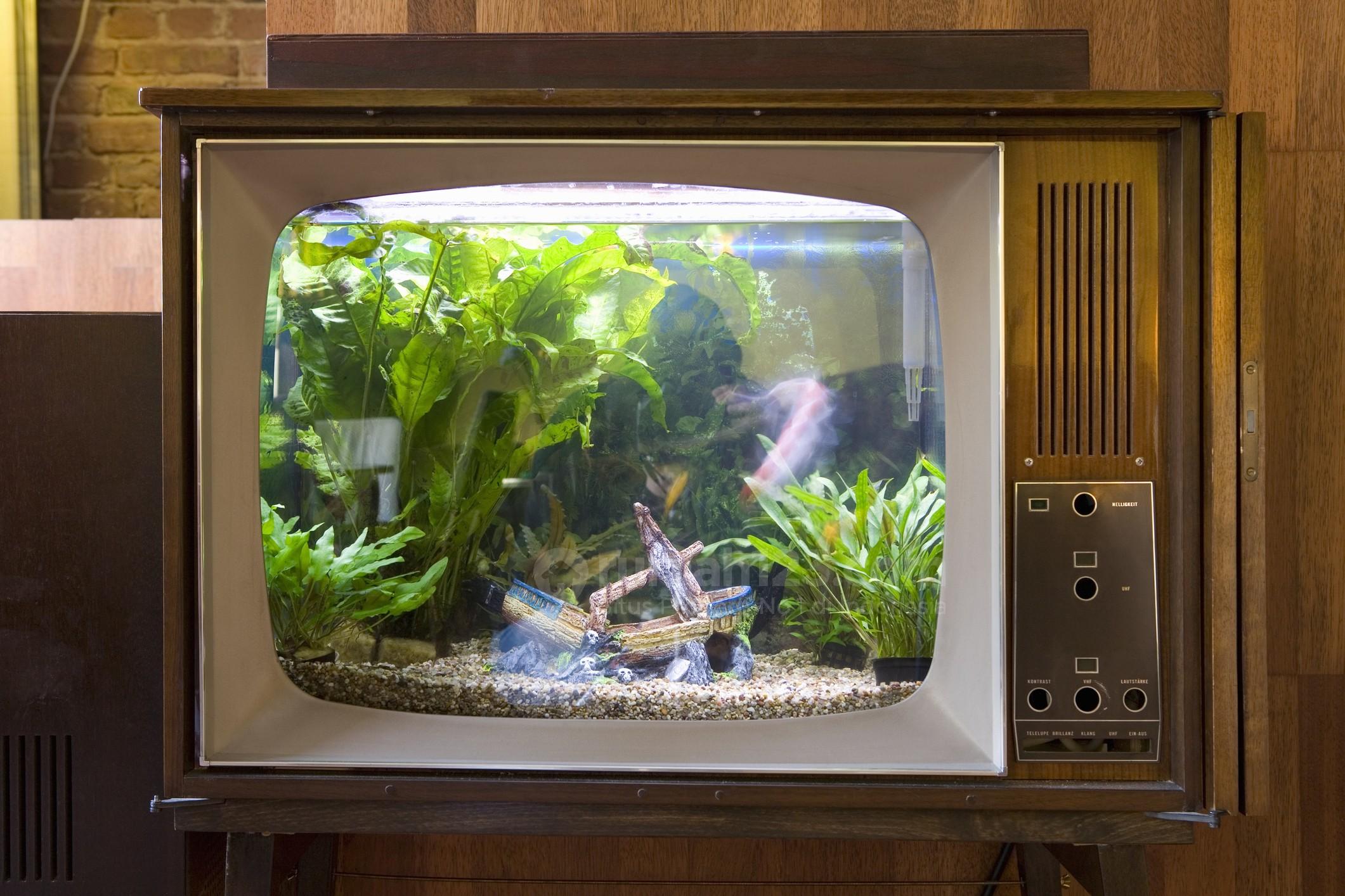 10 Desain Akuarium Unik Untuk Kamu Pecinta Ikan Hias Anti Monoton Rumah123 Com Macam macam bentuk aquarium