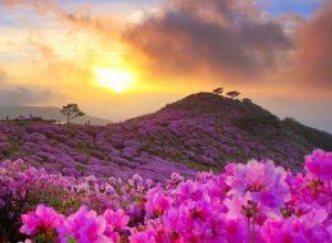7 Manfaat Matahari untuk Kehidupan Manusia, Tumbuhan, Hewan & Alam