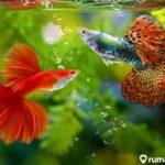 12 Jenis Ikan Aquascape dengan Warna Terpopuler 2021, Rumah Jadi Makin cantik!
