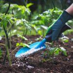 6 Jenis Pupuk Buah yang Bagus & Bisa Mempercepat Tanaman Berbuah