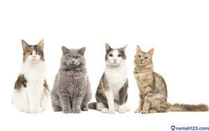 Kenali Jenis Kucing Anggora dan Tips Sebelum Mengadopsinya, yuk!