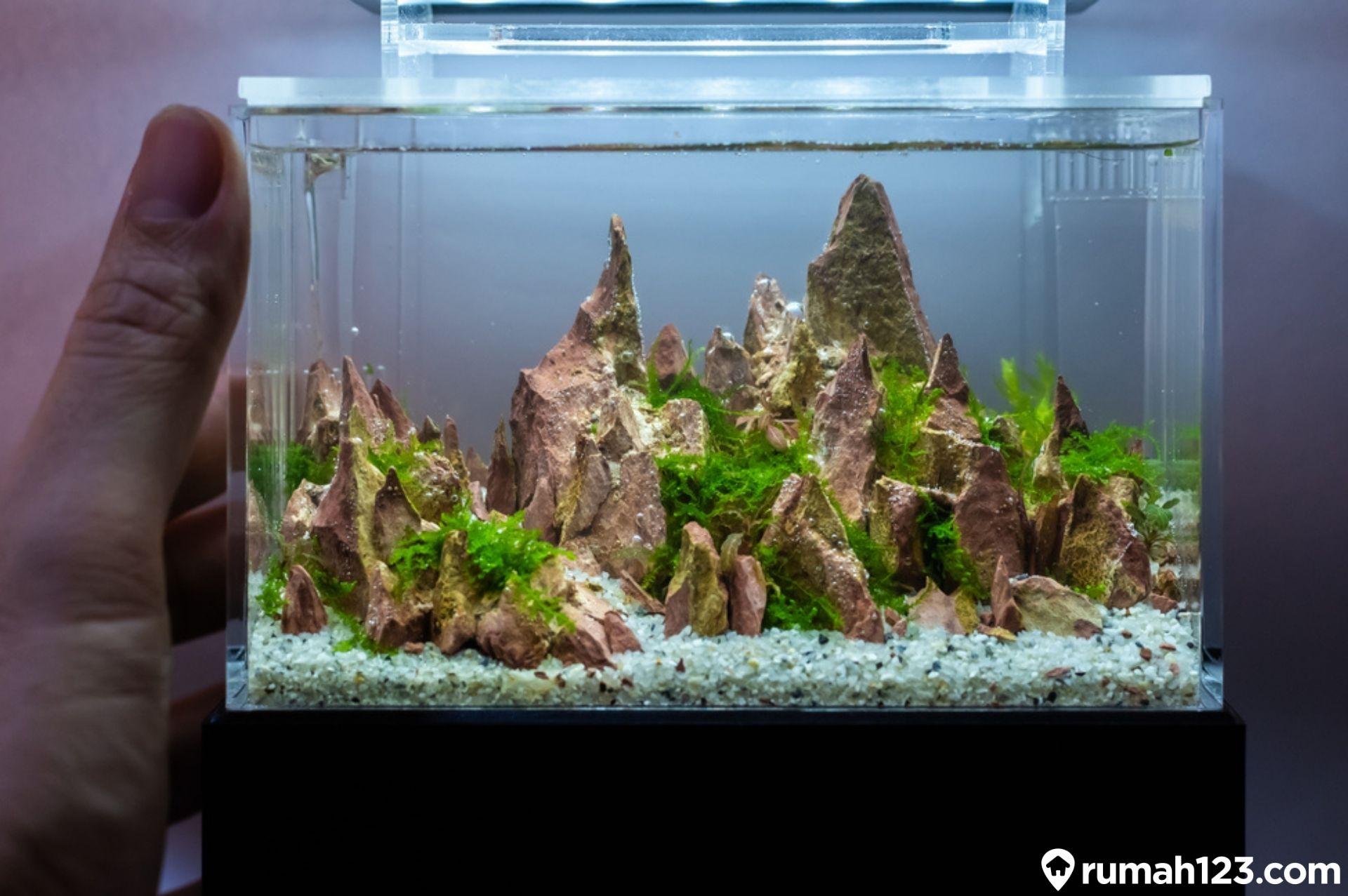 12 Desain Aquarium Minimalis Yang Estetis Dan Anti Makan Tempat Rumah123 Com Macam macam bentuk aquarium