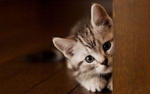 Belajar Hal Positif dari Kucing, Cocok Buat Kamu yang Susah Move On